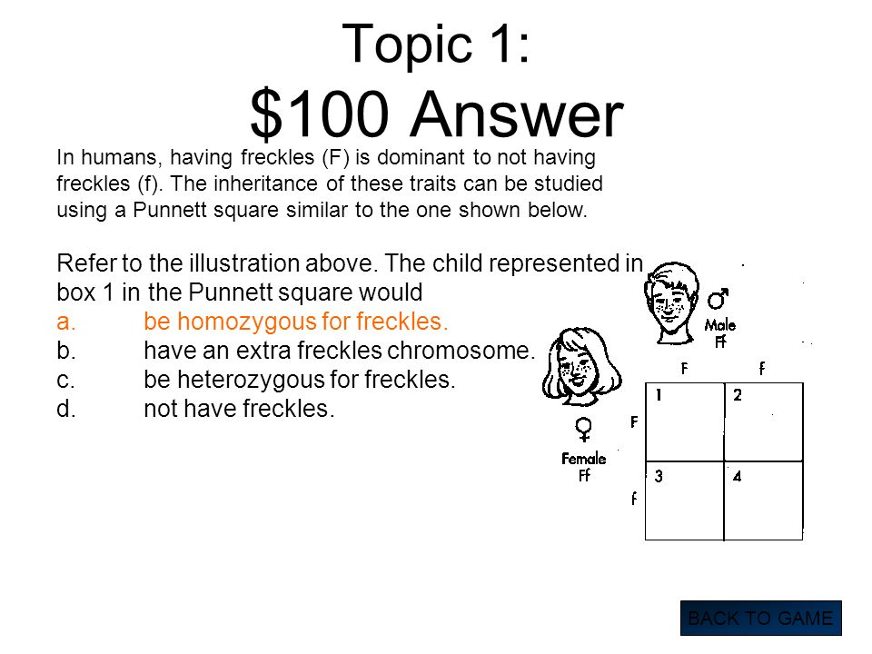 Topic 1: $100 Answer BACK TO GAME In humans, having freckles (F) is dominant to not having freckles (f). The inheritance of these traits can be studie