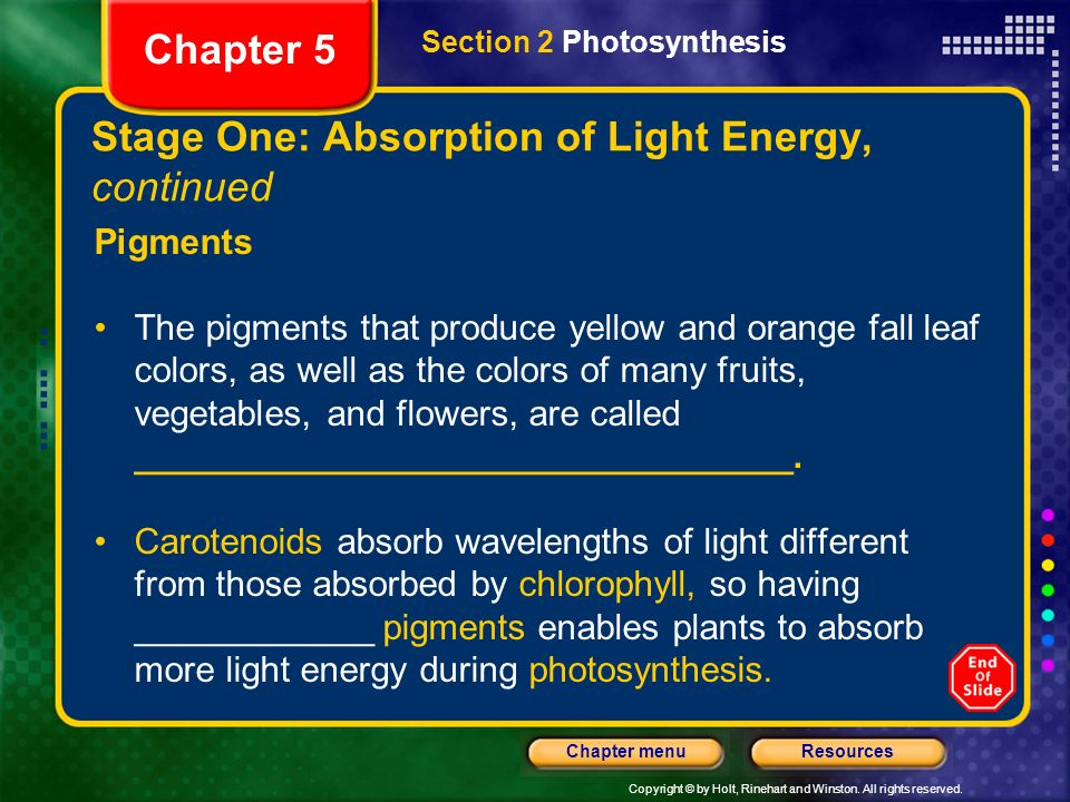 Copyright © by Holt, Rinehart and Winston. All rights reserved. ResourcesChapter menu Stage One: Absorption of Light Energy, continued Pigments The pi