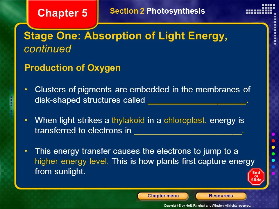 Copyright © by Holt, Rinehart and Winston. All rights reserved. ResourcesChapter menu Stage One: Absorption of Light Energy, continued Production of O