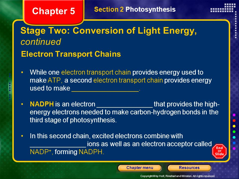 Copyright © by Holt, Rinehart and Winston. All rights reserved. ResourcesChapter menu Stage Two: Conversion of Light Energy, continued Electron Transp