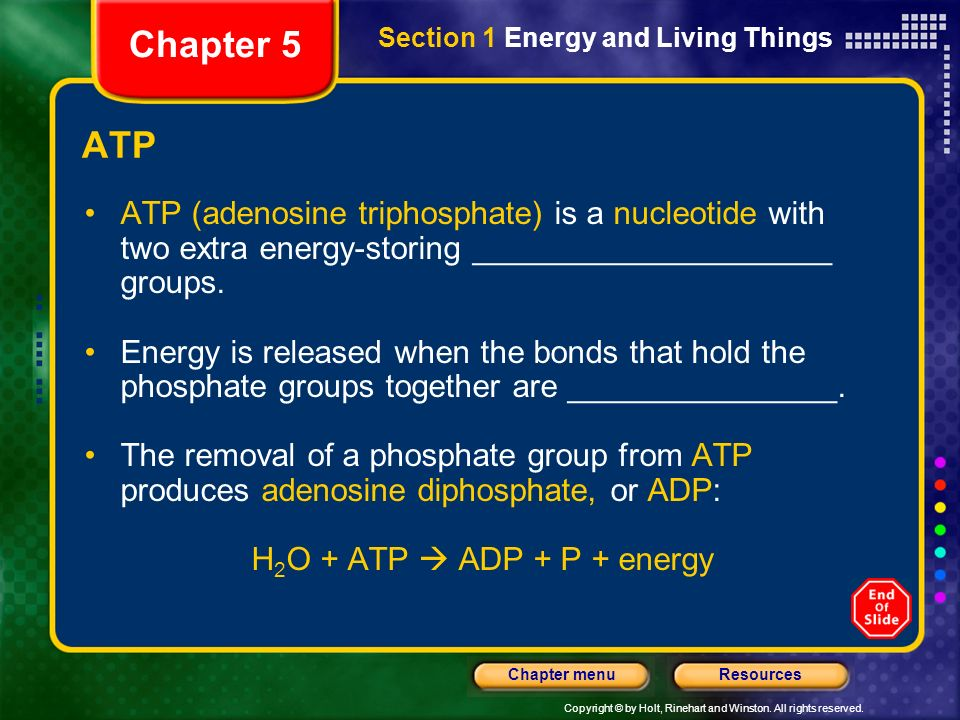 Copyright © by Holt, Rinehart and Winston. All rights reserved. ResourcesChapter menu ATP ATP (adenosine triphosphate) is a nucleotide with two extra