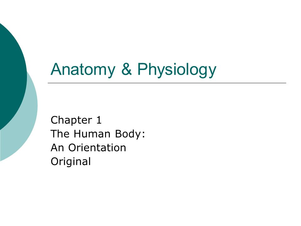 Anatomy & Physiology Chapter 1 The Human Body: An Orientation Original