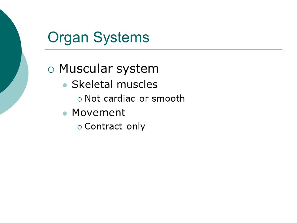 Organ Systems Muscular system Skeletal muscles Not cardiac or smooth Movement Contract only
