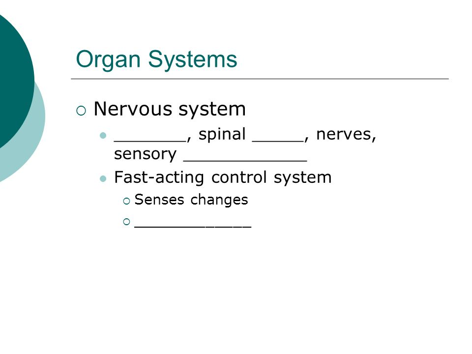 Organ Systems Nervous system _______, spinal _____, nerves, sensory ____________ Fast-acting control system Senses changes _____________