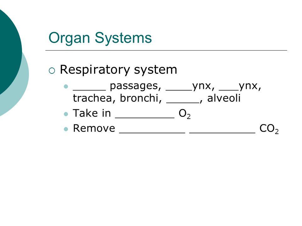 Organ Systems Respiratory system _____ passages, ____ynx, ___ynx, trachea, bronchi, _____, alveoli Take in _________ O 2 Remove __________ __________
