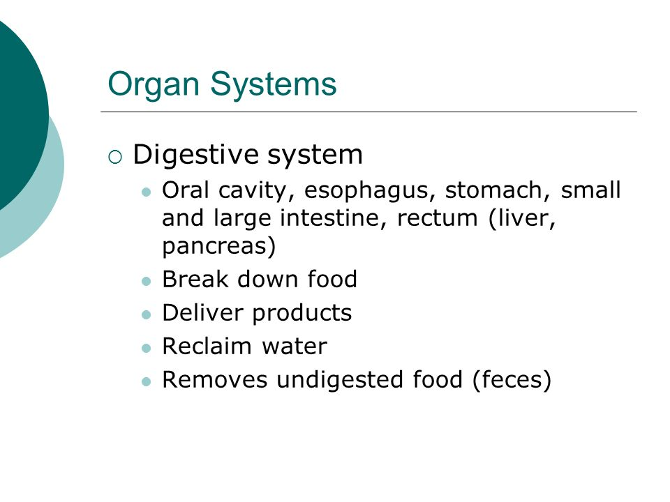 Organ Systems Digestive system Oral cavity, esophagus, stomach, small and large intestine, rectum (liver, pancreas) Break down food Deliver products R