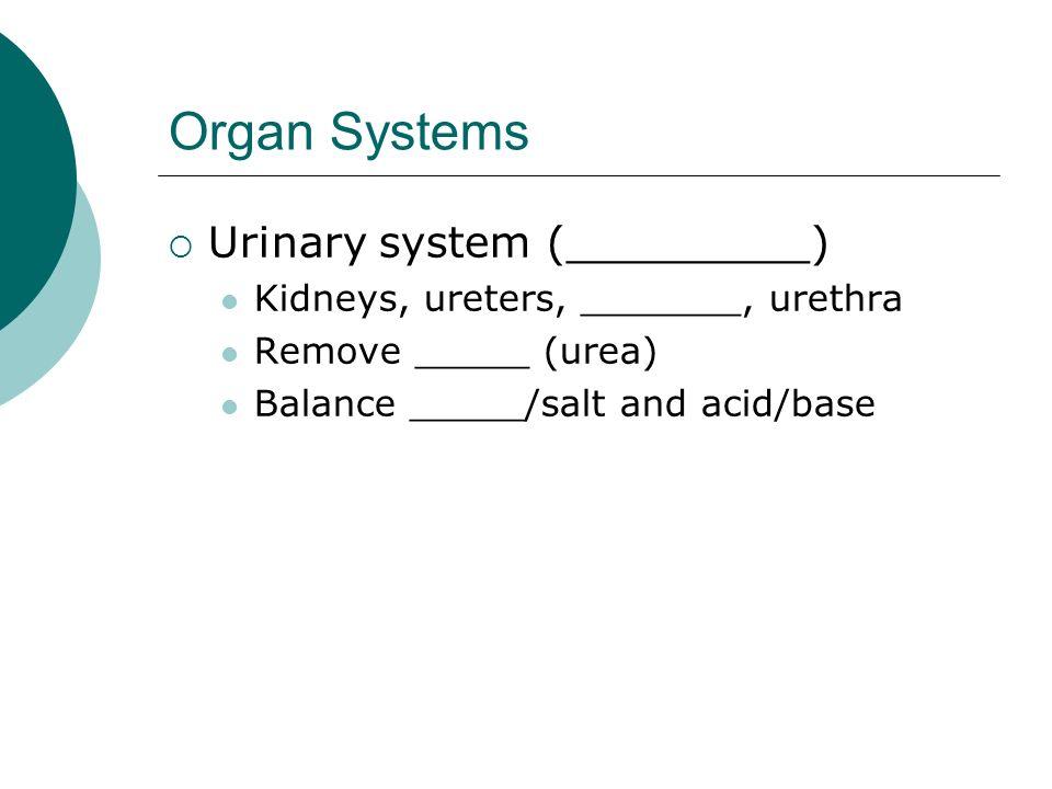 Organ Systems Urinary system (_________) Kidneys, ureters, _______, urethra Remove _____ (urea) Balance _____/salt and acid/base