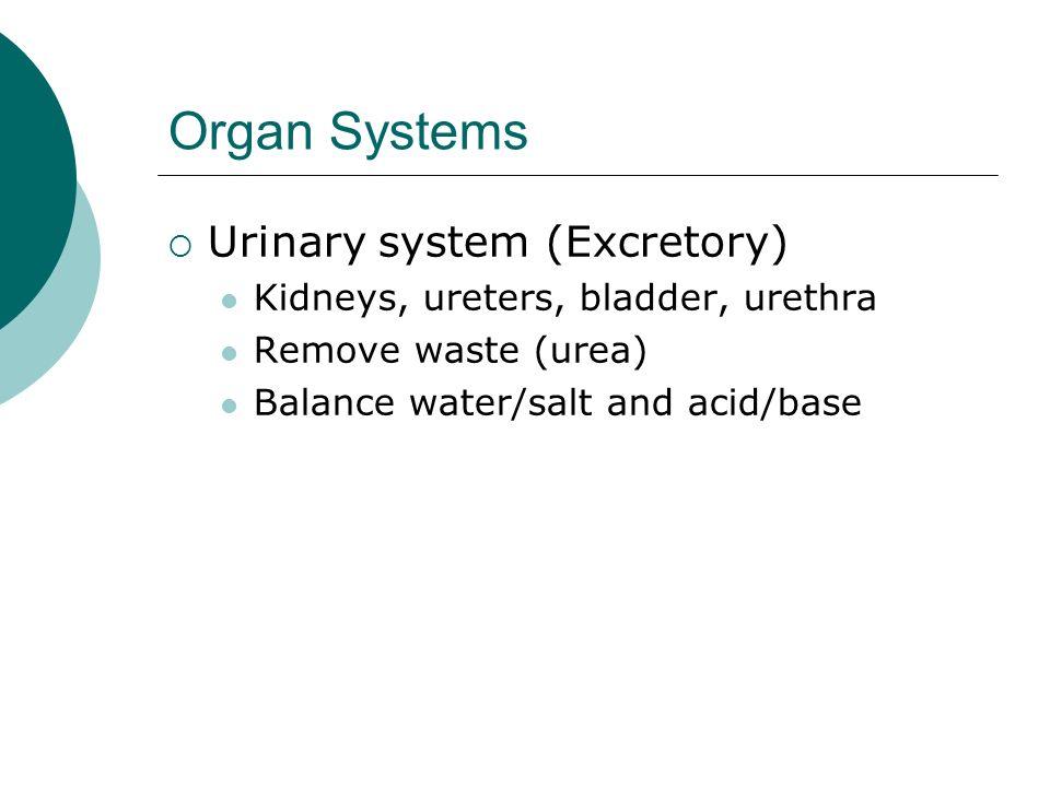 Organ Systems Urinary system (Excretory) Kidneys, ureters, bladder, urethra Remove waste (urea) Balance water/salt and acid/base