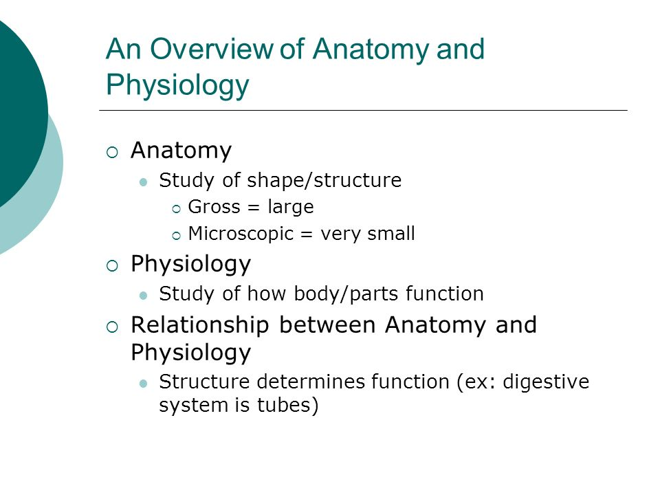 An Overview of Anatomy and Physiology Anatomy Study of shape/structure Gross = large Microscopic = very small Physiology Study of how body/parts funct