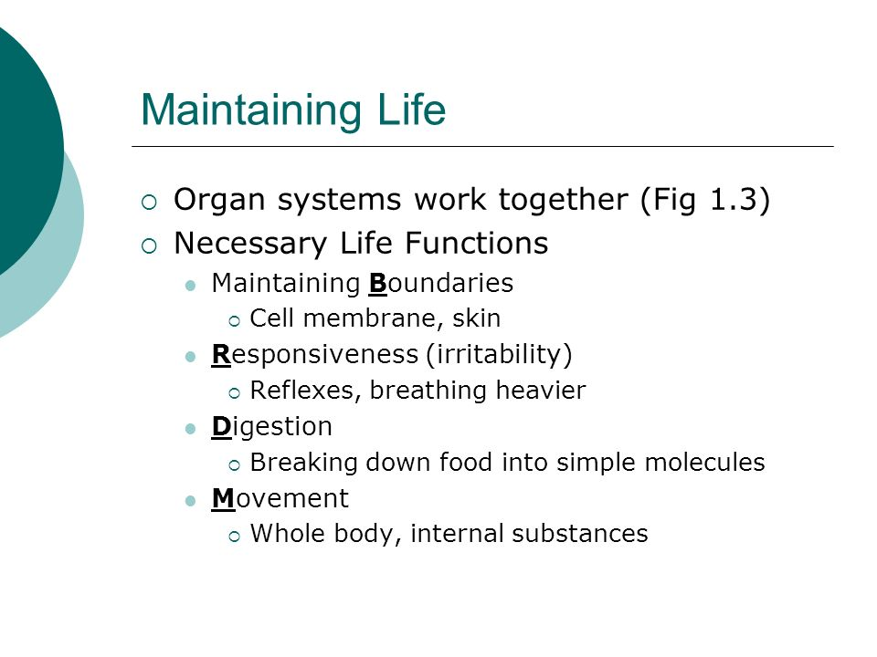Maintaining Life Organ systems work together (Fig 1.3) Necessary Life Functions Maintaining Boundaries Cell membrane, skin Responsiveness (irritabilit