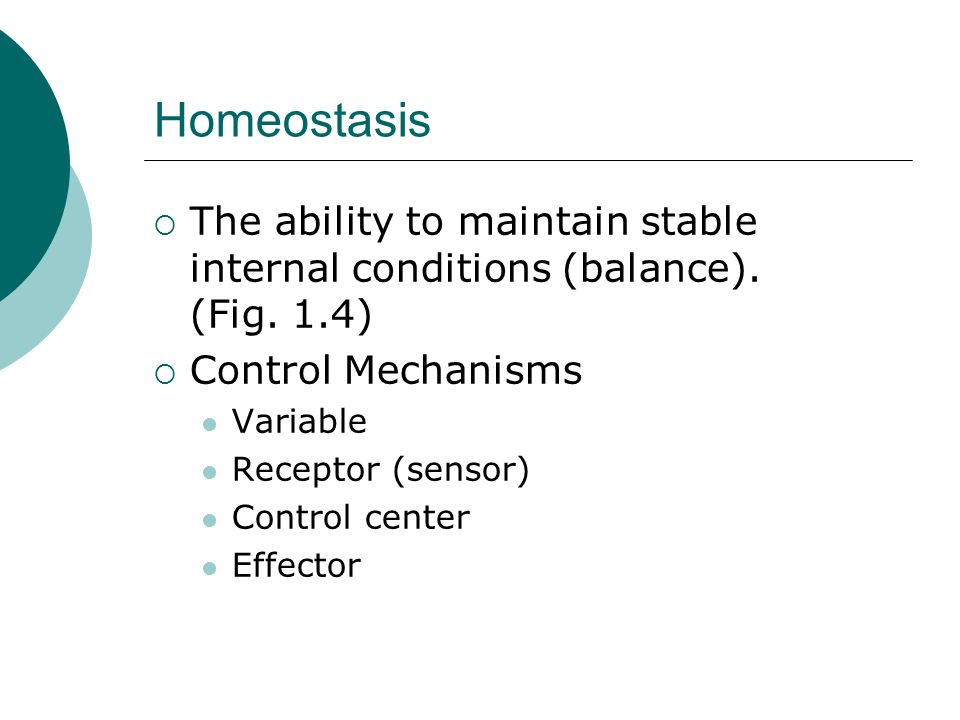 Homeostasis The ability to maintain stable internal conditions (balance). (Fig. 1.4) Control Mechanisms Variable Receptor (sensor) Control center Effe