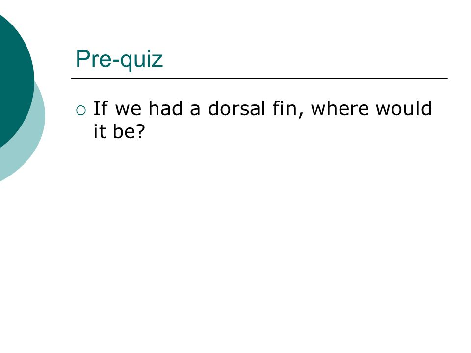 Pre-quiz If we had a dorsal fin, where would it be?
