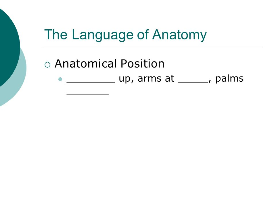 The Language of Anatomy Anatomical Position ________ up, arms at _____, palms _______