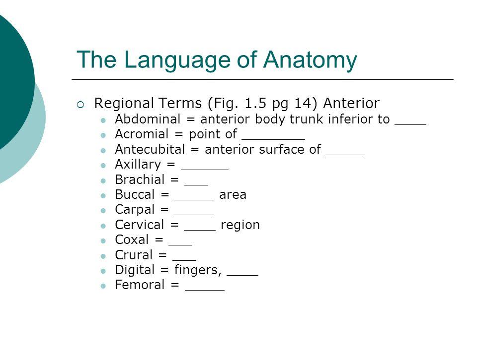 The Language of Anatomy Regional Terms (Fig. 1.5 pg 14) Anterior Abdominal = anterior body trunk inferior to ____ Acromial = point of ________ Antecub