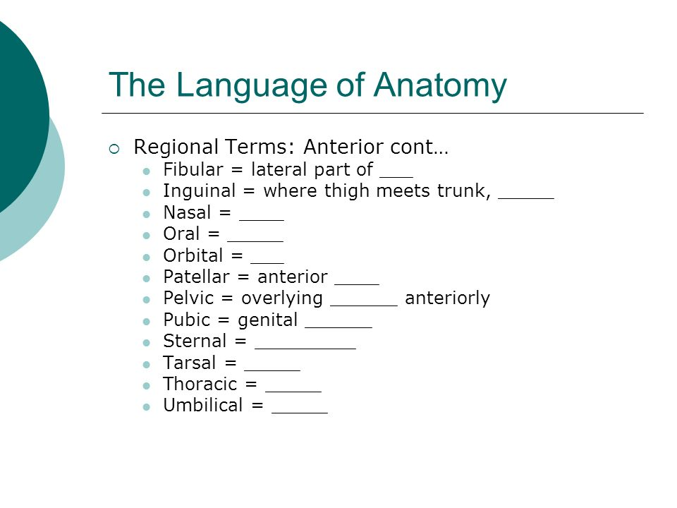 The Language of Anatomy Regional Terms: Anterior cont… Fibular = lateral part of ___ Inguinal = where thigh meets trunk, _____ Nasal = ____ Oral = ___