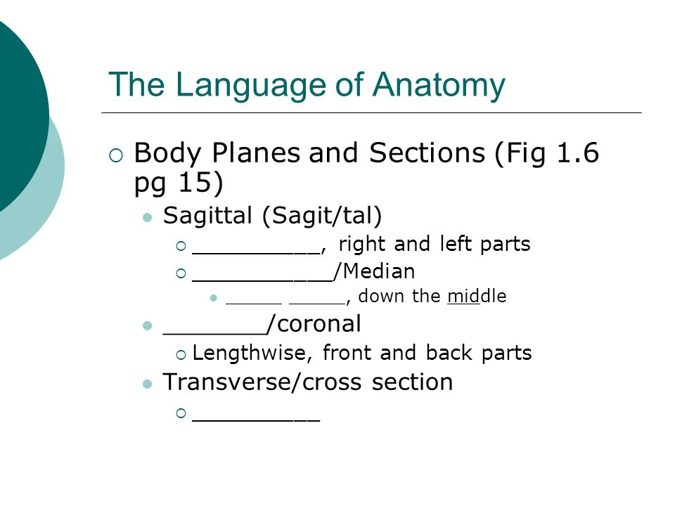 The Language of Anatomy Body Planes and Sections (Fig 1.6 pg 15) Sagittal (Sagit/tal) __________, right and left parts ___________/Median _____ _____,