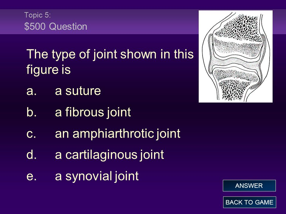 Topic 5: $500 Question The type of joint shown in this figure is a.a suture b.a fibrous joint c.an amphiarthrotic joint d.a cartilaginous joint e.a synovial joint BACK TO GAME ANSWER
