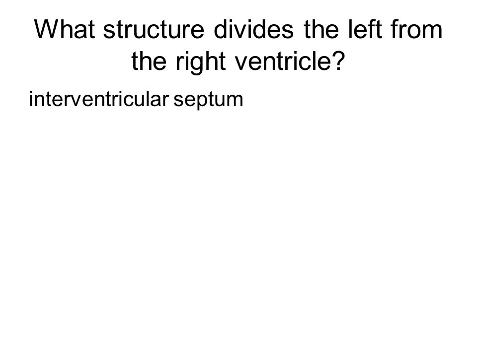 What structure divides the left from the right ventricle? interventricular septum
