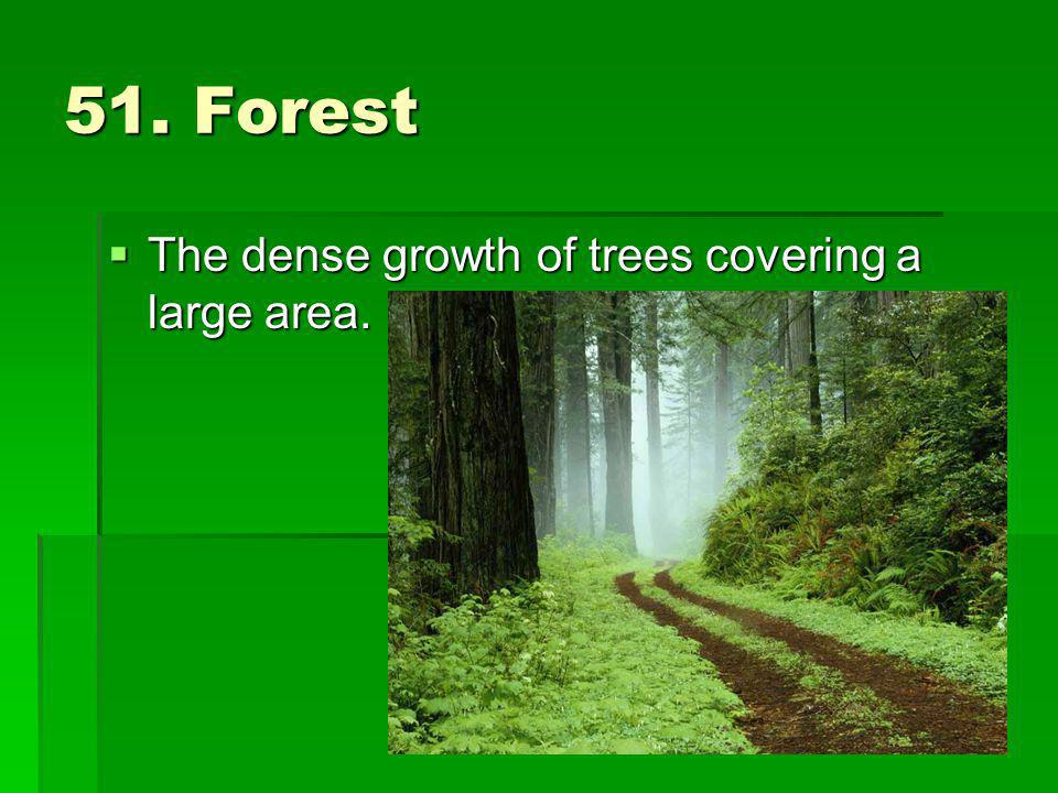 51. Forest The dense growth of trees covering a large area. The dense growth of trees covering a large area.