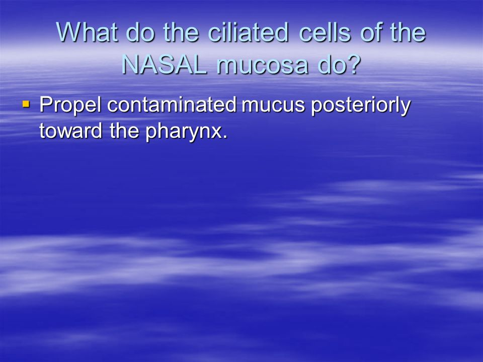 What do the ciliated cells of the NASAL mucosa do? Propel contaminated mucus posteriorly toward the pharynx. Propel contaminated mucus posteriorly tow