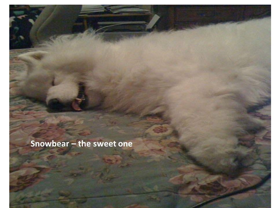 7 Snowbear – the sweet one