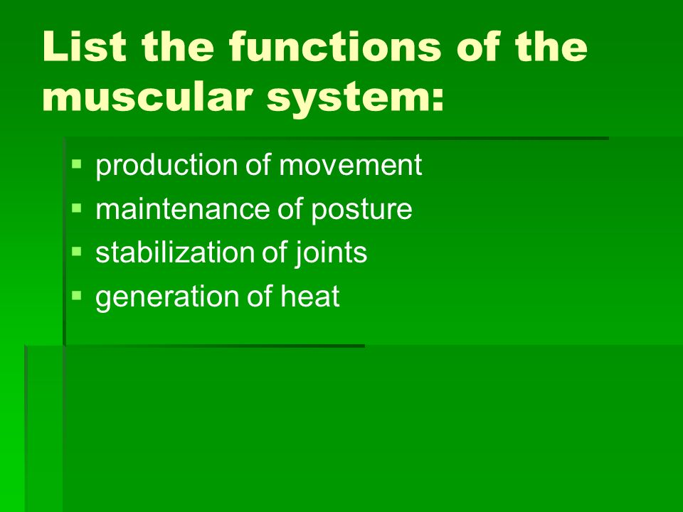List the functions of the muscular system: production of movement maintenance of posture stabilization of joints generation of heat