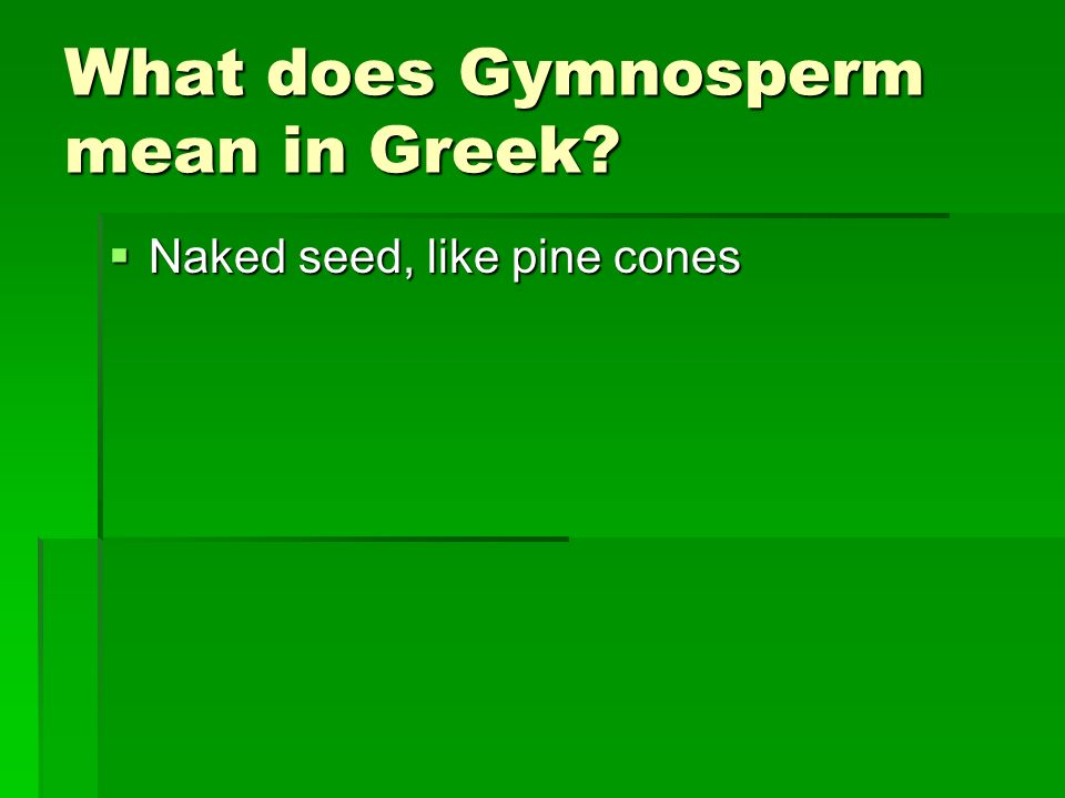What does Gymnosperm mean in Greek? Naked seed, like pine cones Naked seed, like pine cones