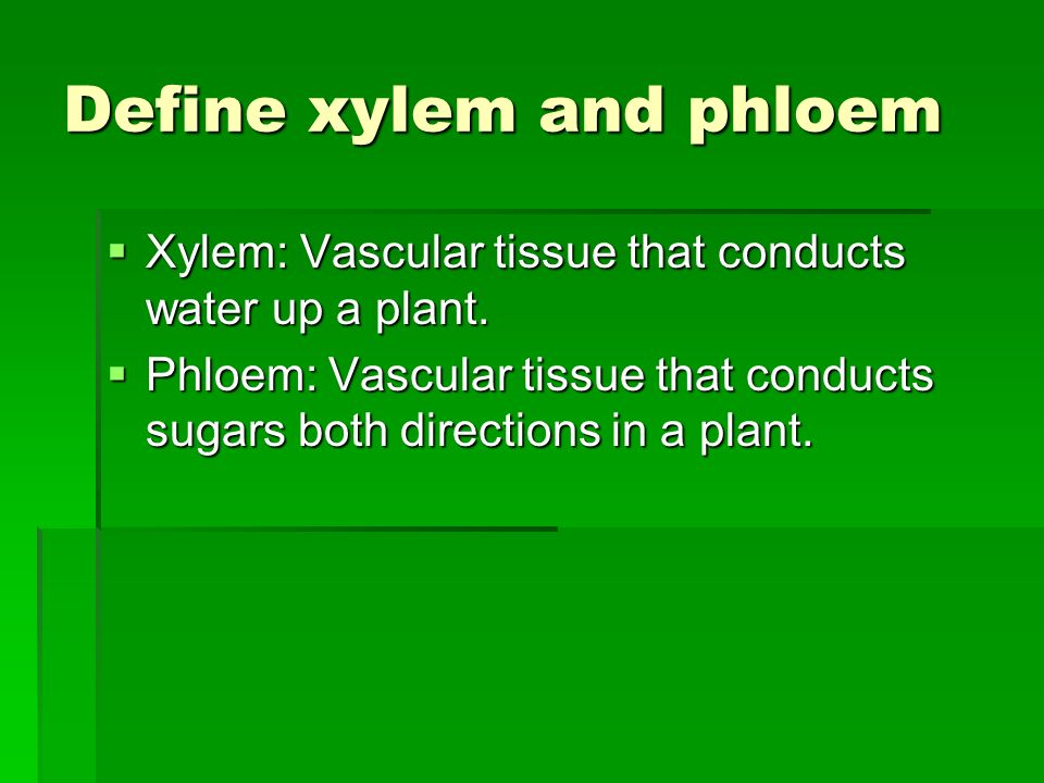 Define xylem and phloem Xylem: Vascular tissue that conducts water up a plant. Xylem: Vascular tissue that conducts water up a plant. Phloem: Vascular