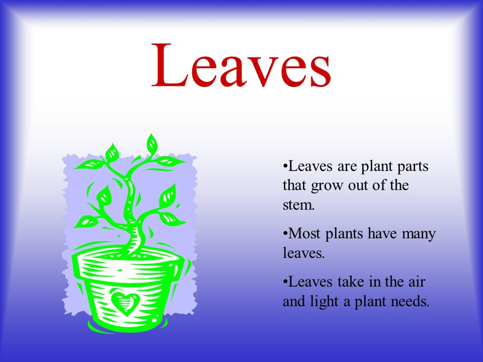 Leaves Leaves are plant parts that grow out of the stem. Most plants have many leaves. Leaves take in the air and light a plant needs.