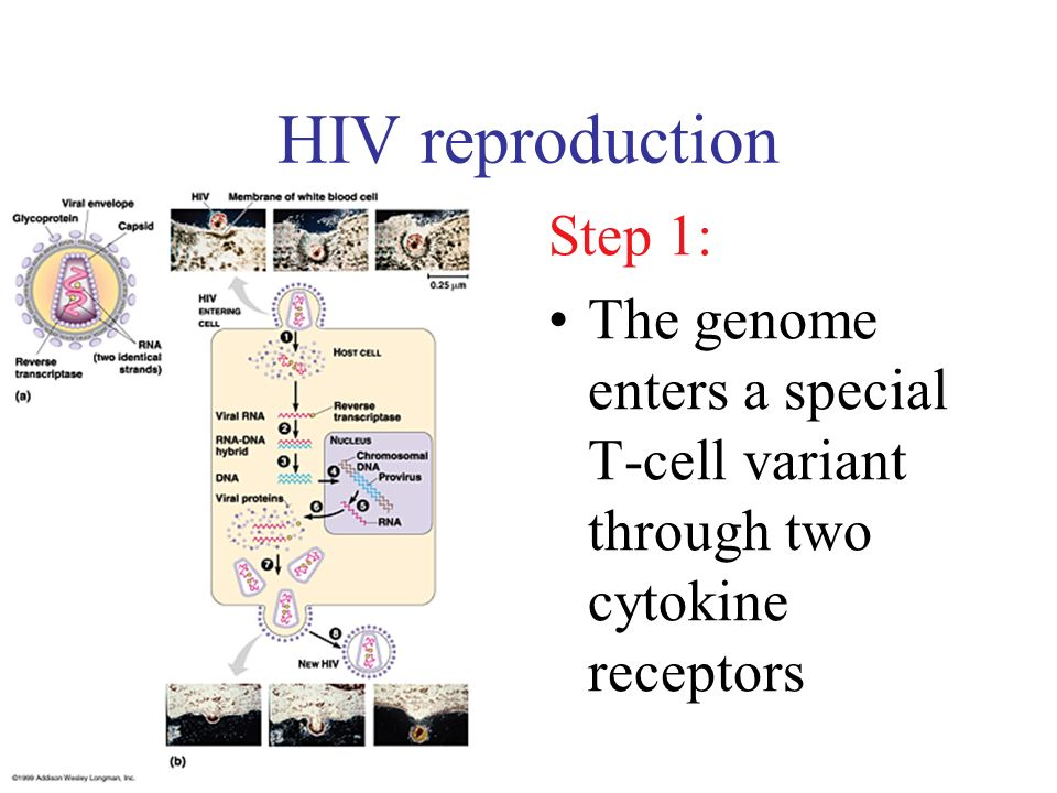 HIV reproduction Step 1: The genome enters a special T-cell variant through two cytokine receptors
