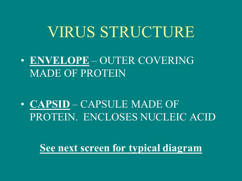 VIRUS STRUCTURE ENVELOPE – OUTER COVERING MADE OF PROTEIN CAPSID – CAPSULE MADE OF PROTEIN.