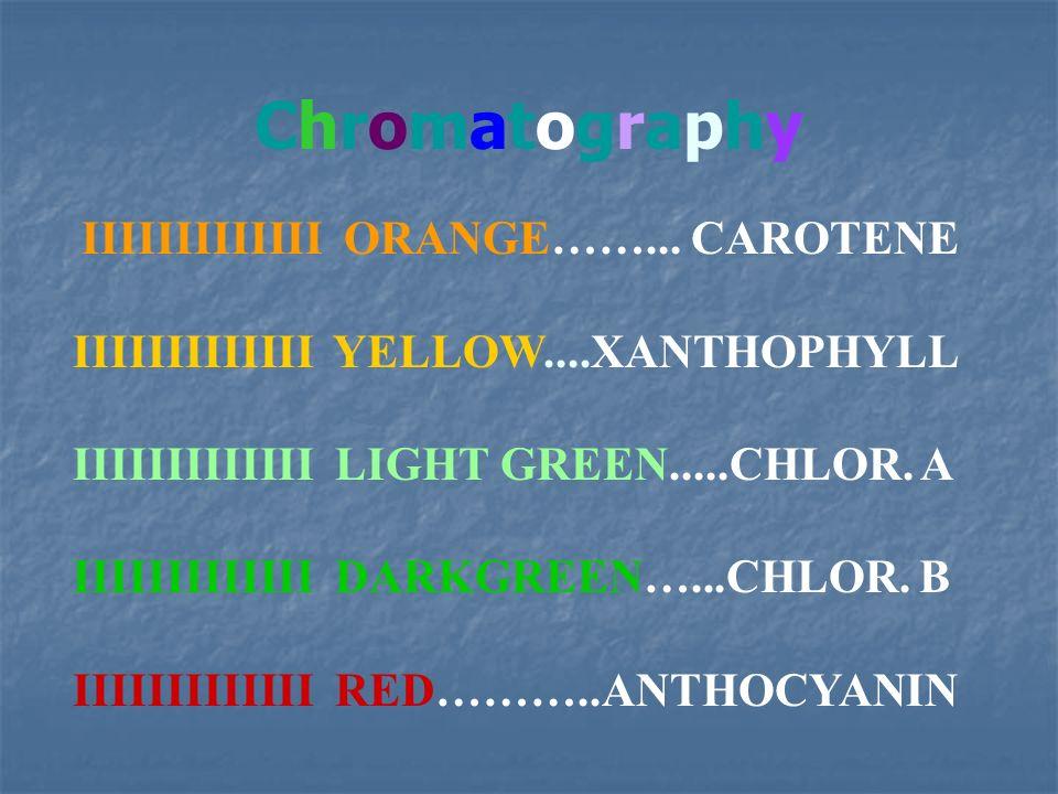 IIIIIIIIIIIII ORANGE……... CAROTENE IIIIIIIIIIIII YELLOW....XANTHOPHYLL IIIIIIIIIIIII LIGHT GREEN.....CHLOR. A IIIIIIIIIIIII DARKGREEN…...CHLOR. B IIII
