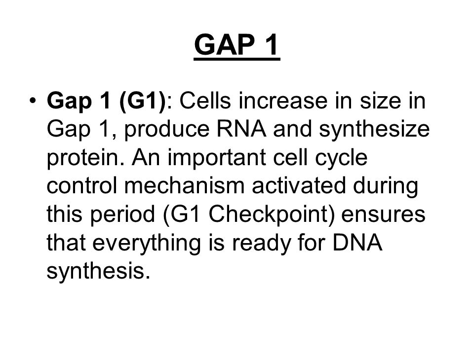 GAP 1 Gap 1 (G1): Cells increase in size in Gap 1, produce RNA and synthesize protein. An important cell cycle control mechanism activated during this