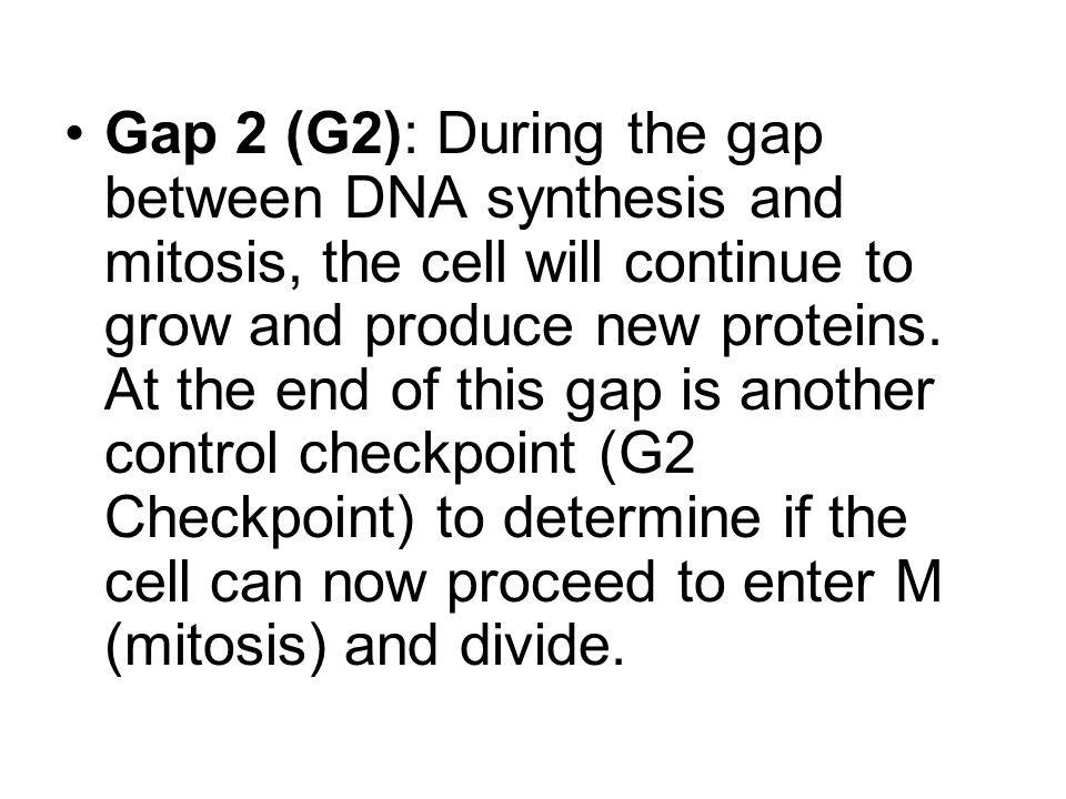 Gap 2 (G2): During the gap between DNA synthesis and mitosis, the cell will continue to grow and produce new proteins. At the end of this gap is anoth
