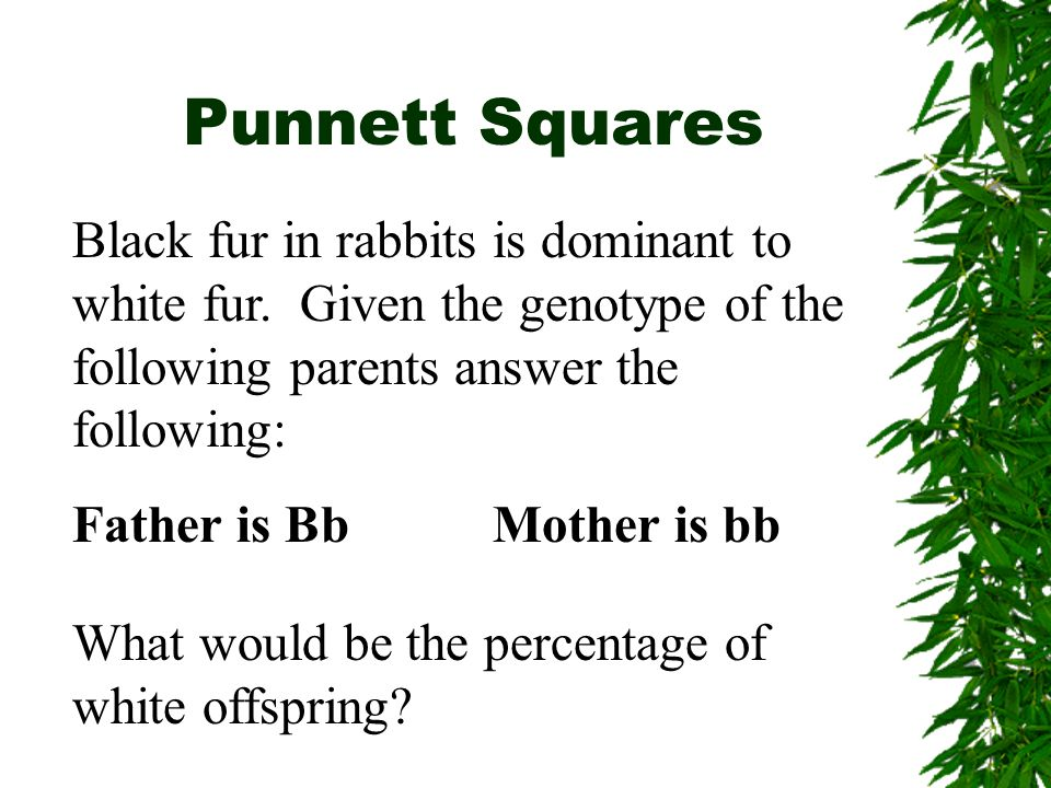 Punnett Squares What would be the percentage of white offspring.