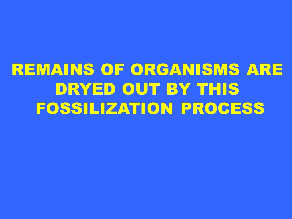 REMAINS OF ORGANISMS ARE DRYED OUT BY THIS FOSSILIZATION PROCESS