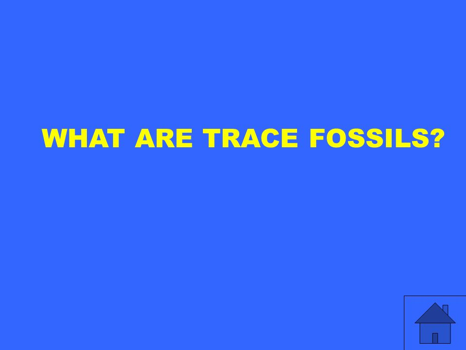WHAT ARE TRACE FOSSILS