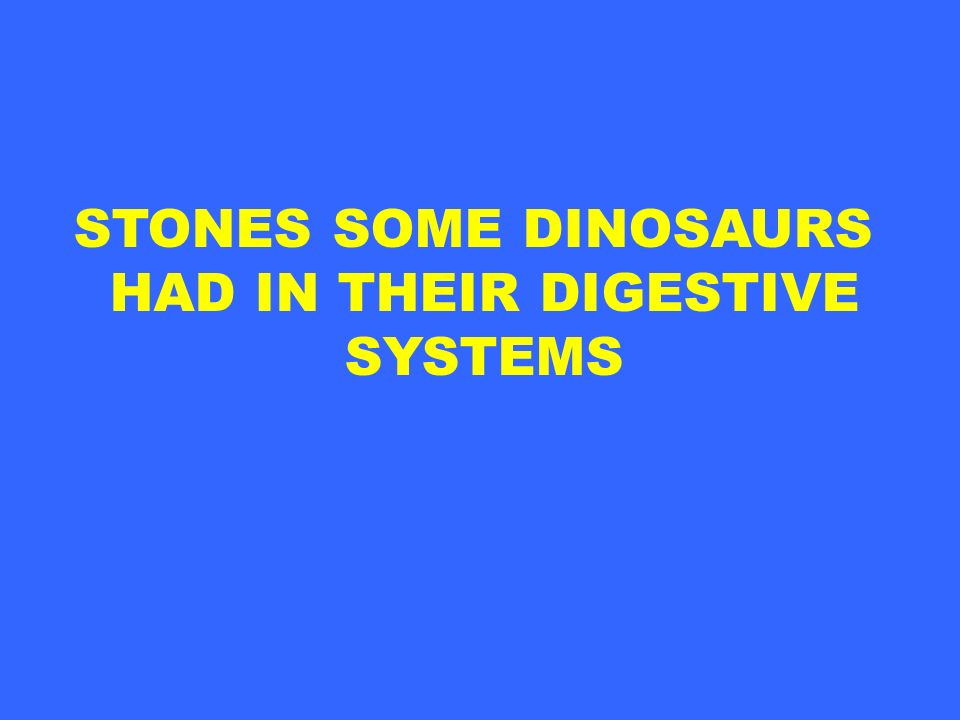 STONES SOME DINOSAURS HAD IN THEIR DIGESTIVE SYSTEMS