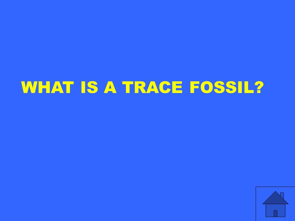 WHAT IS A TRACE FOSSIL