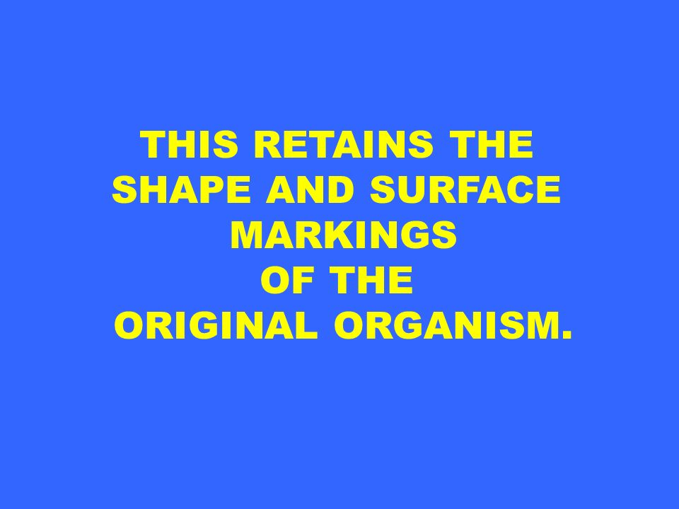THIS RETAINS THE SHAPE AND SURFACE MARKINGS OF THE ORIGINAL ORGANISM.