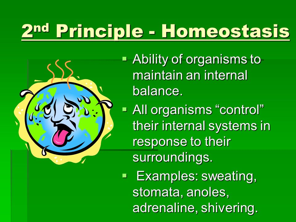 3 rd Principle - Organization All living systems are highly organized forms of matter.