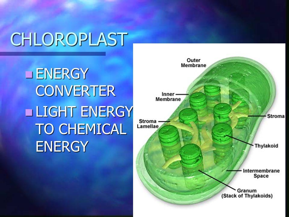 CHLOROPLAST ENERGY CONVERTER ENERGY CONVERTER LIGHT ENERGY TO CHEMICAL ENERGY LIGHT ENERGY TO CHEMICAL ENERGY