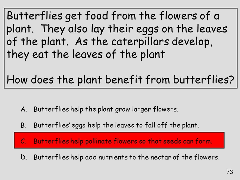 Butterflies get food from the flowers of a plant. They also lay their eggs on the leaves of the plant. As the caterpillars develop, they eat the leave