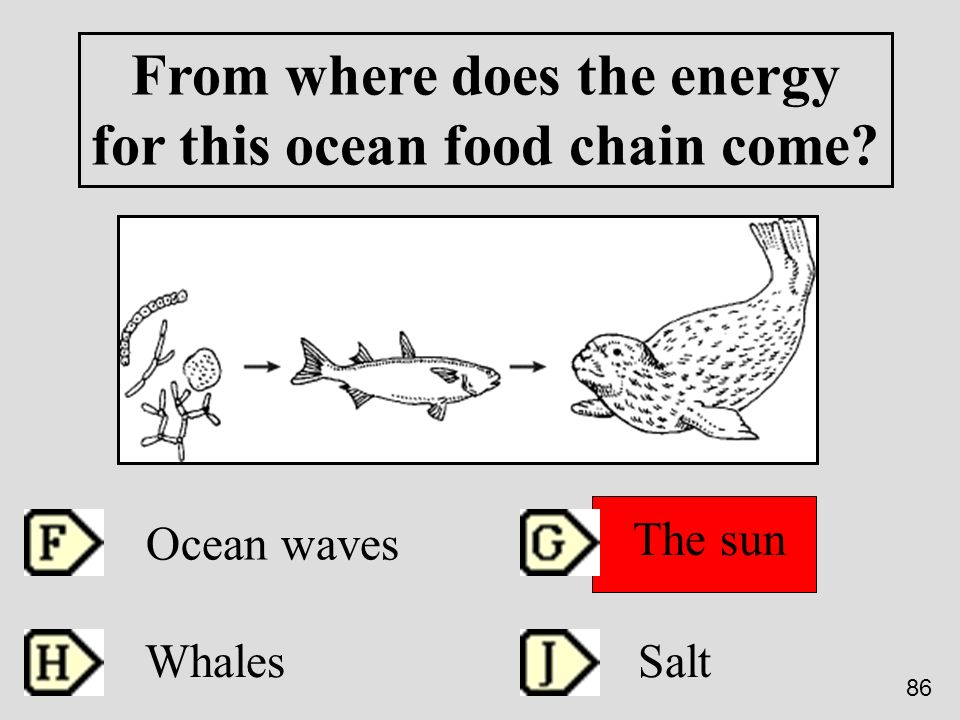From where does the energy for this ocean food chain come? Ocean waves The sun Whales Salt 86
