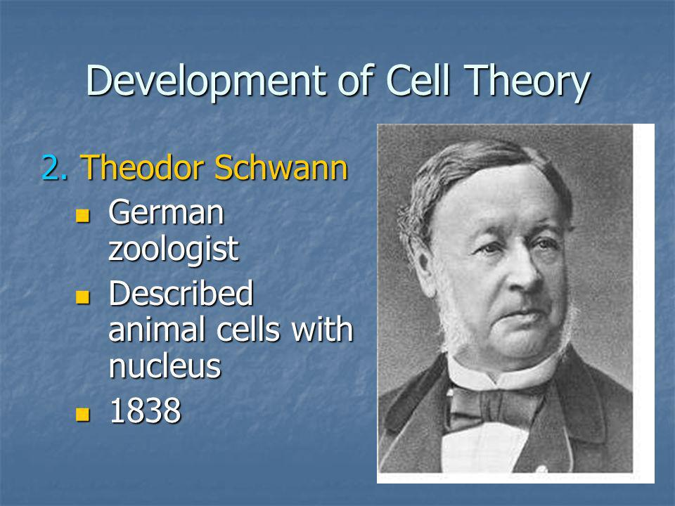 Development of Cell Theory 2.Theodor Schwann German zoologist German zoologist Described animal cells with nucleus Described animal cells with nucleus