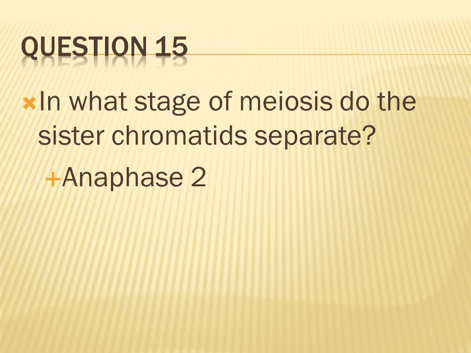 In what stage of meiosis do the sister chromatids separate? Anaphase 2