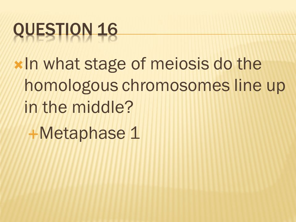 In what stage of meiosis do the homologous chromosomes line up in the middle? Metaphase 1