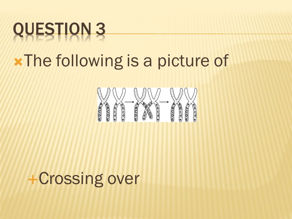 In what stage of meiosis does crossing over happen? Prophase 1