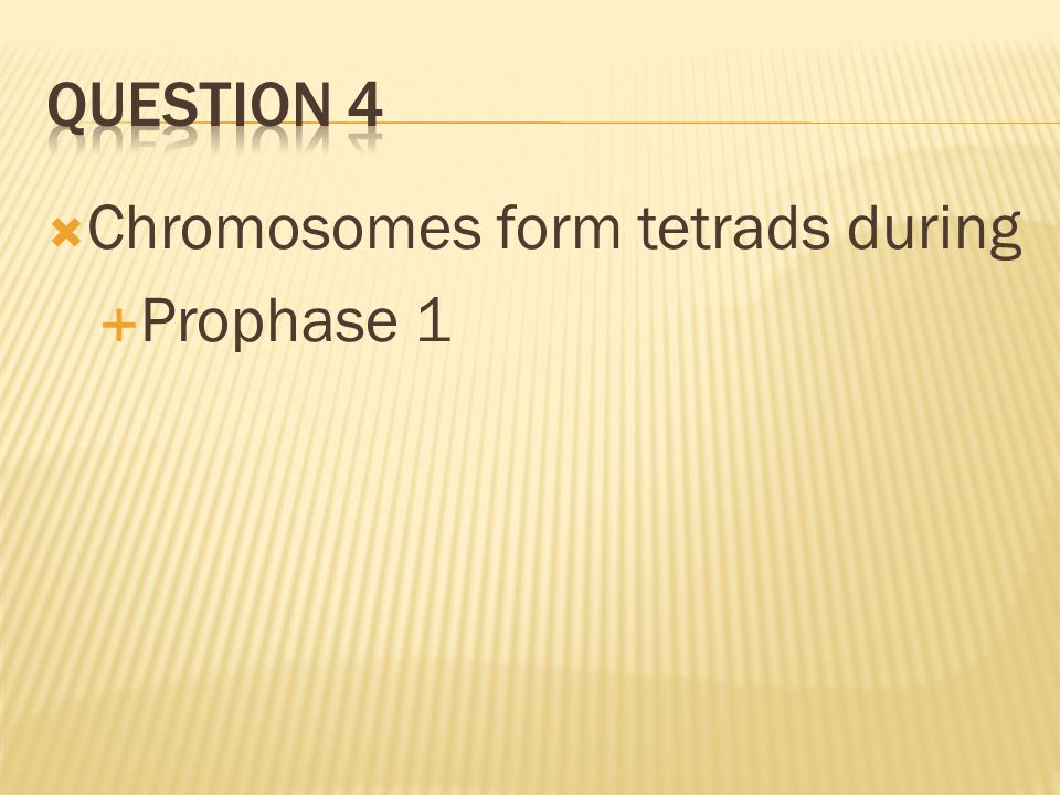 Chromosomes form tetrads during Prophase 1