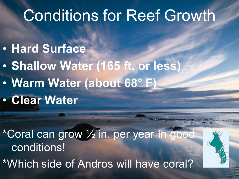 Conditions for Reef Growth Hard Surface Shallow Water (165 ft. or less) Warm Water (about 68° F) Clear Water *Coral can grow ½ in. per year in good co